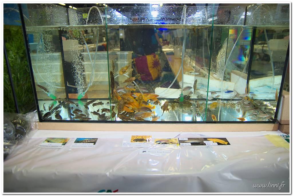Bourse aquariophile Nantaise le 27 octobre 2013, photos Bourse%20aqua44%202013%2038