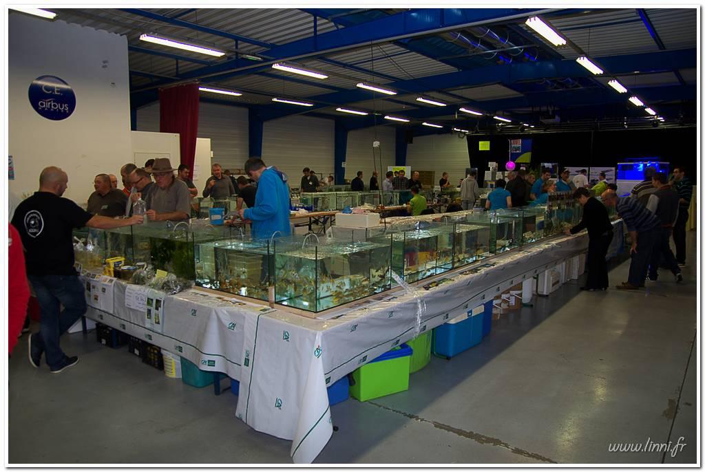 Bourse aquariophile Nantaise le 27 octobre 2013, photos Bourse%20aqua44%202013%2039