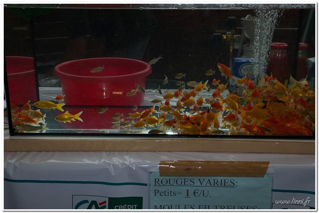 Bourse aquariophile Nantaise le 27 octobre 2013, photos Bourse%20aqua44%202013%2040