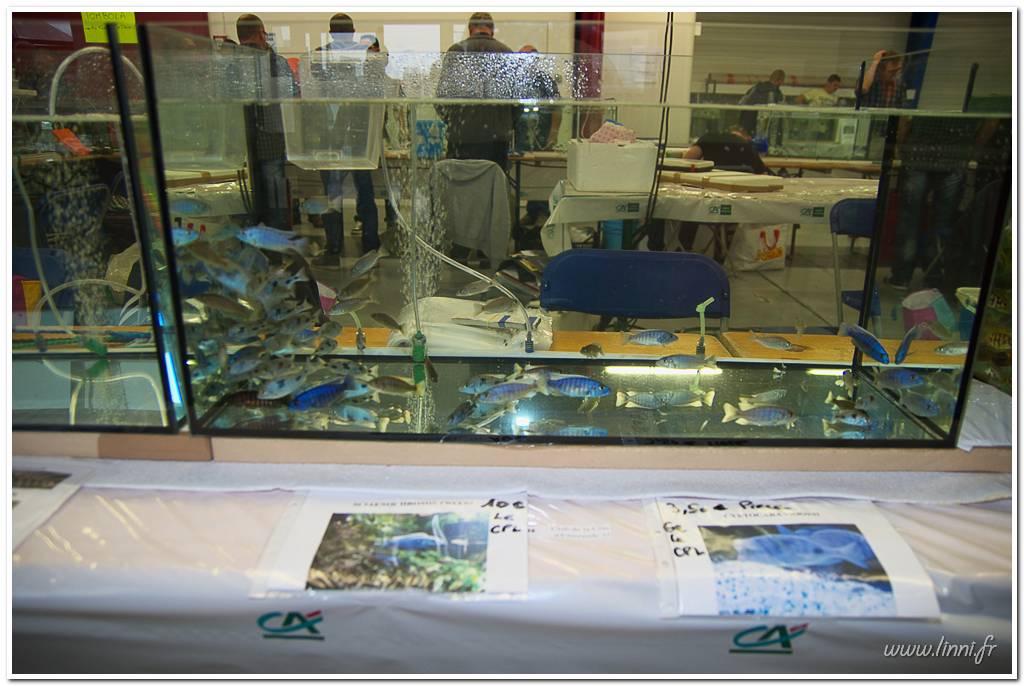 Bourse aquariophile Nantaise le 27 octobre 2013, photos Bourse%20aqua44%202013%2043