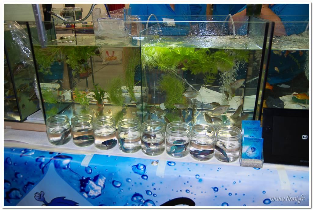 Bourse aquariophile Nantaise le 27 octobre 2013, photos Bourse%20aqua44%202013%2044