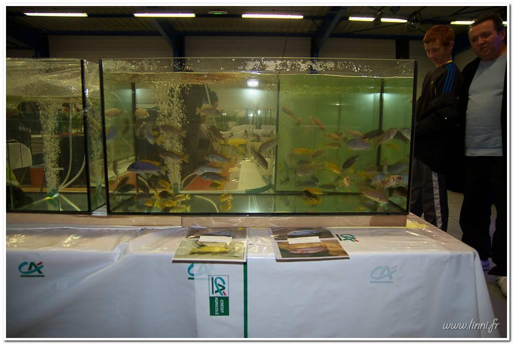 Bourse aquariophile Nantaise le 27 octobre 2013, photos Bourse%20aqua44%202013%2050