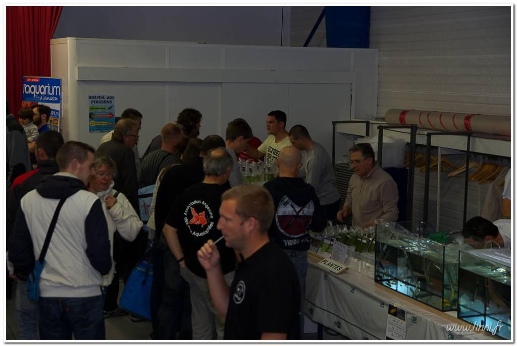 Bourse aquariophile Nantaise le 27 octobre 2013, photos Bourse%20aqua44%202013%2056