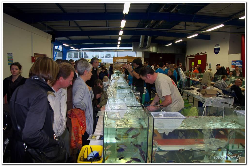 Bourse aquariophile Nantaise le 27 octobre 2013, photos Bourse%20aqua44%202013%2068