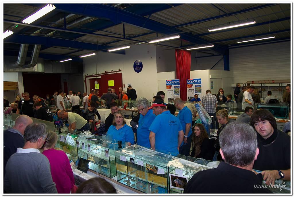Bourse aquariophile Nantaise le 27 octobre 2013, photos Bourse%20aqua44%202013%2069