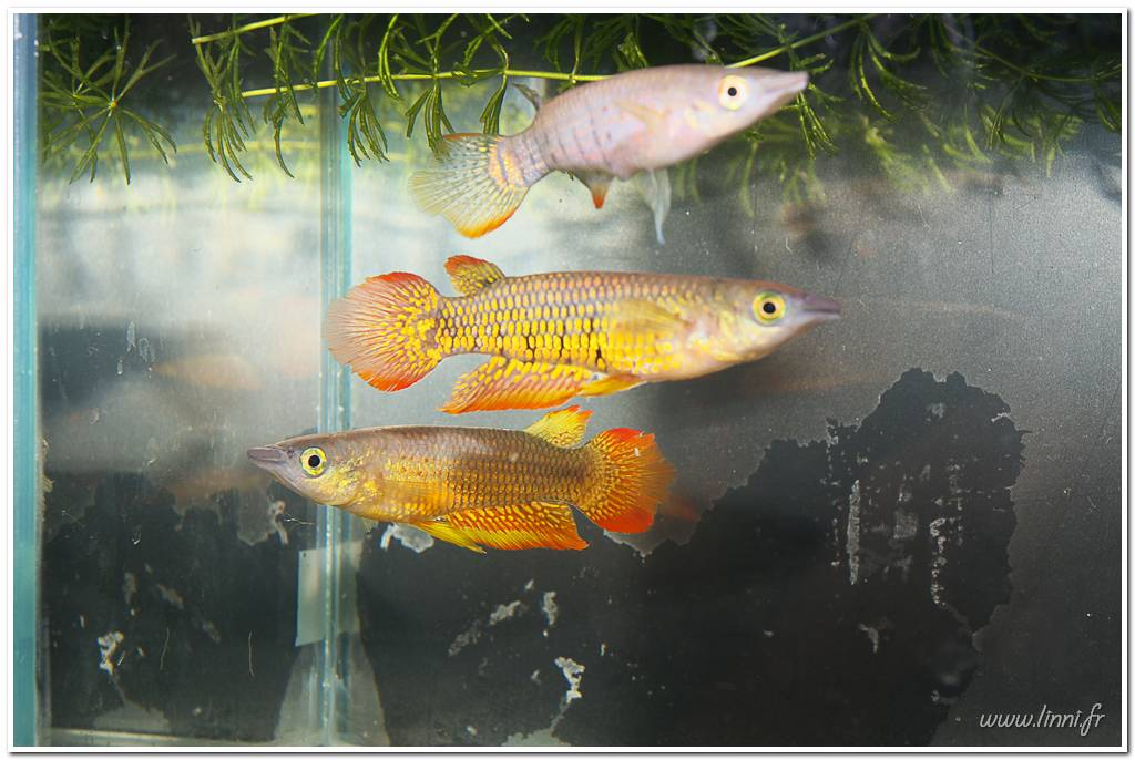 Bourse aquariophile Nantaise le 27 octobre 2013, photos Bourse%20aqua44%202013%2070