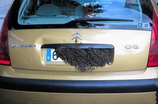 "GOLF  "" R "" édition FULL BLACK  - Page 3 Nid-d-abeilles-262378"