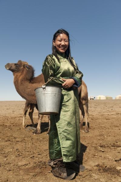 les chevaux mongols 16687