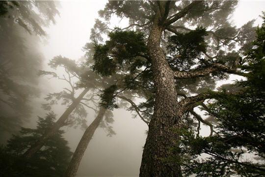 HighTech : Télécharger fonds ecran HD Fond-ecran-arbre-brouillard-881832