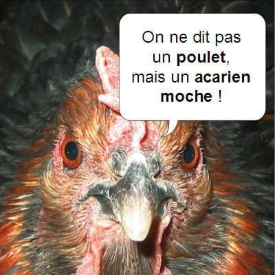 L'omelette de l'amère poularde (aux oeufs de Meaux) 2ème service Poulet-420463