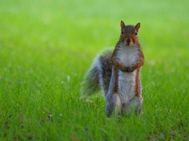 Quelle couleur préférez-vous pour Tails ?  Ecureuil