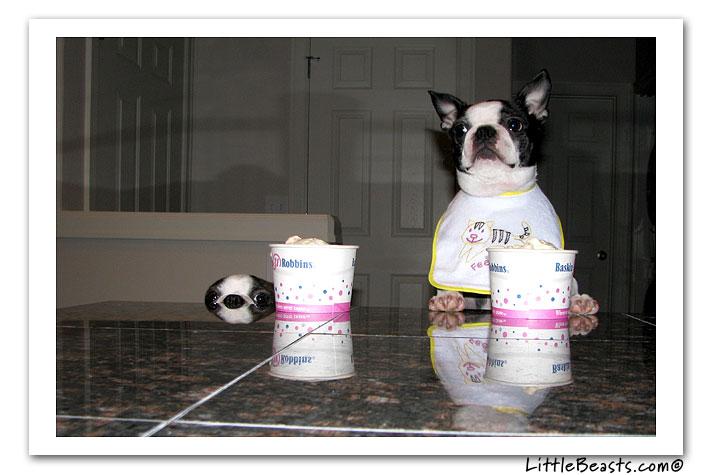 Donner de la nourriture à son chien à table et conséquences - Page 2 Pod10-600