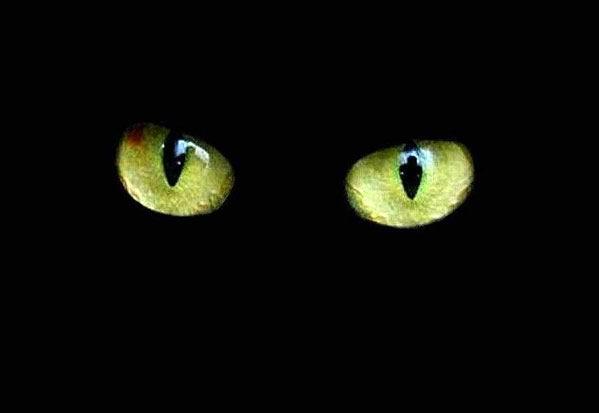 16° CDF / Jeu des pronos - Prono Bastia-Auxerre Black-cat