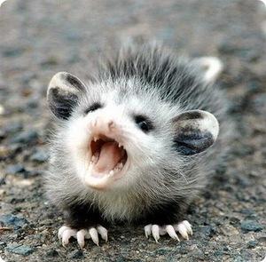 Домашние любимчики! - Страница 6 Opossum14
