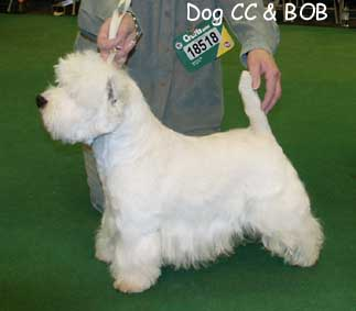 West Highland White Terrier 2004Crufts25