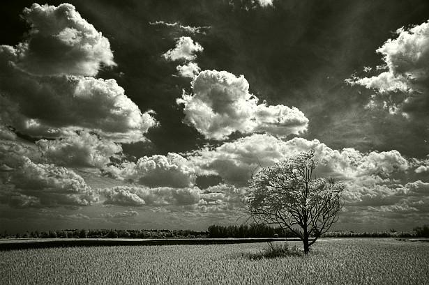Crno-bele slike 0222_mr_lonely