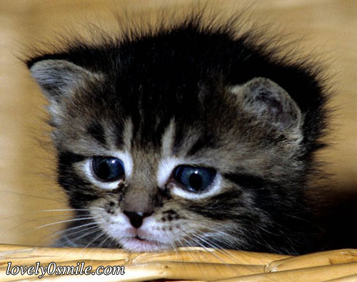 صور قطط جملية  M-151