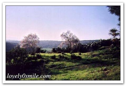 موسوعة الصور لفلسطين الحبيبة 054