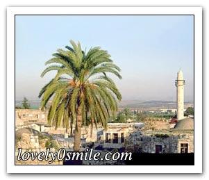 فلسطين إسطورة يكتبها التاريخ 066