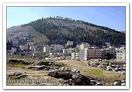 فلسطين إسطورة يكتبها التاريخ 070