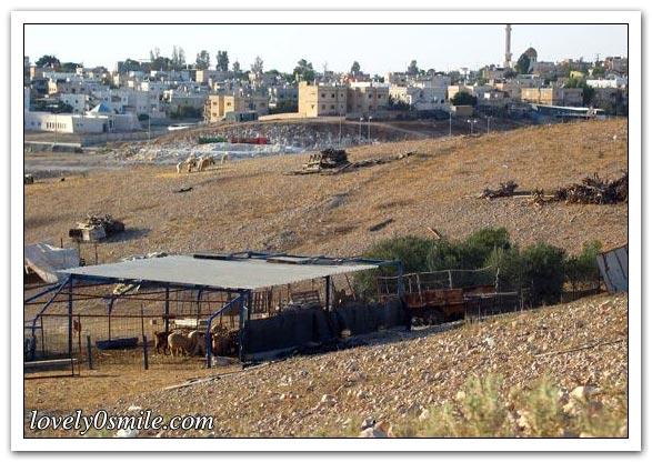 موسوعة الصور لفلسطين الحبيبة 090