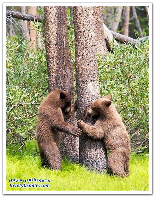 صور أنواع الدببة حول العالم Bears-51