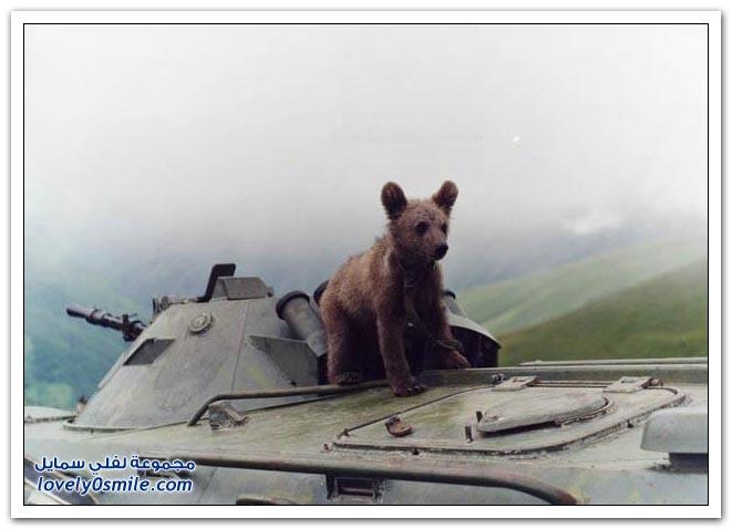صور أنواع الدببة حول العالم Bears-52