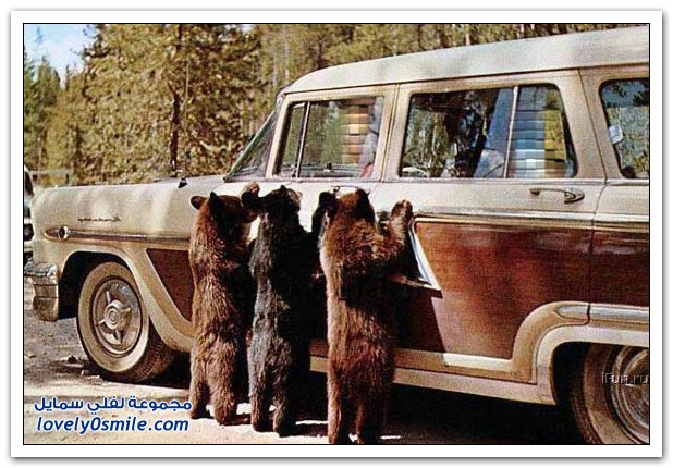 صور أنواع الدببة حول العالم Bears-53