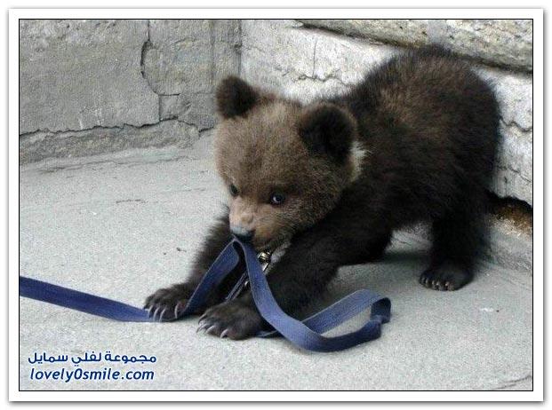 صور أنواع الدببة حول العالم Bears-54