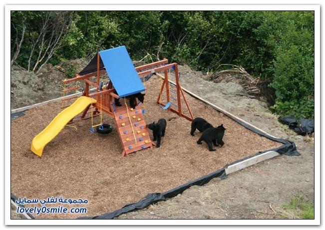 صور أنواع الدببة حول العالم Bears-55
