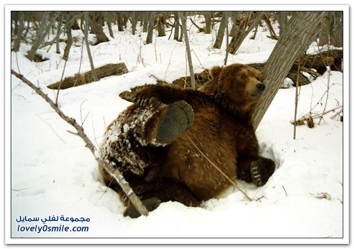 صور أنواع الدببة حول العالم Bears-60