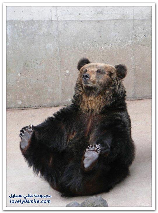 صور أنواع الدببة حول العالم Bears-62