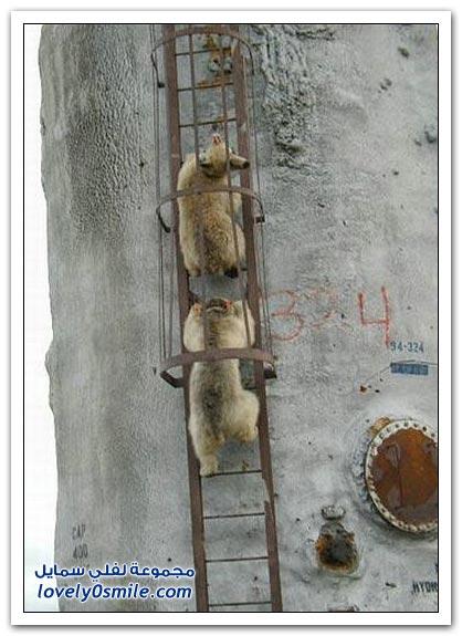 صور أنواع الدببة حول العالم Bears-63