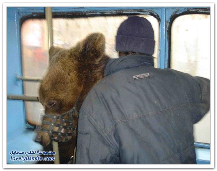صور أنواع الدببة حول العالم Bears-64