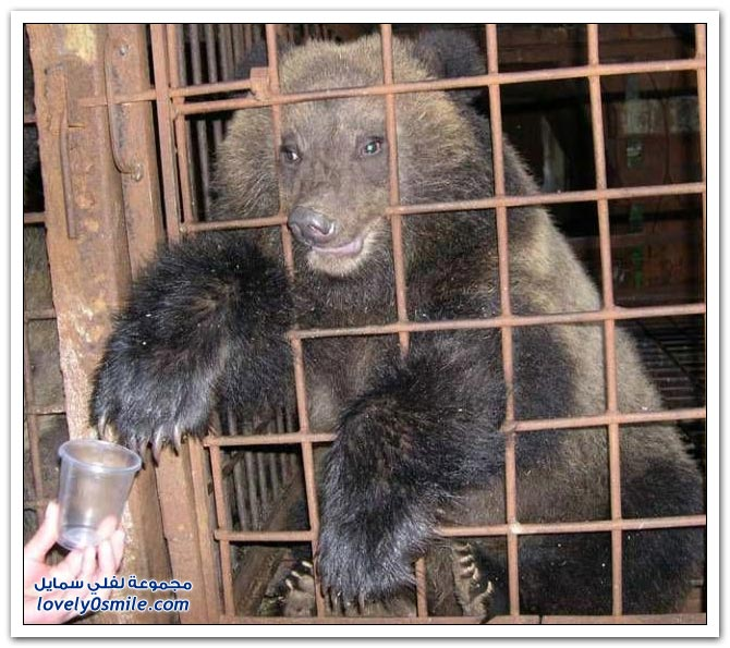 صور أنواع الدببة حول العالم Bears-65