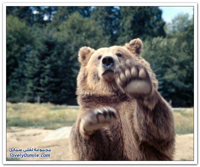 صور أنواع الدببة حول العالم Bears-66