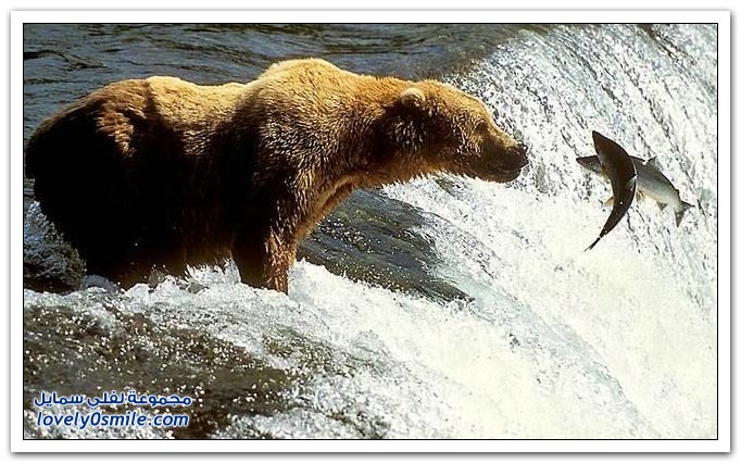 صور أنواع الدببة حول العالم Bears-67