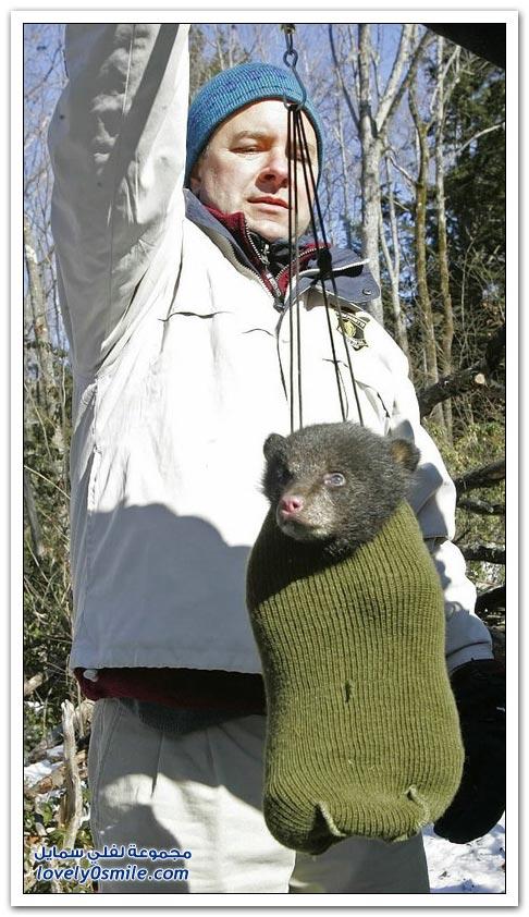 صور أنواع الدببة حول العالم Bears-68