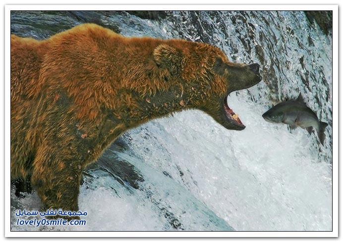 صور أنواع الدببة حول العالم Bears-69
