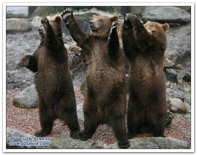 صور أنواع الدببة حول العالم Bears-70