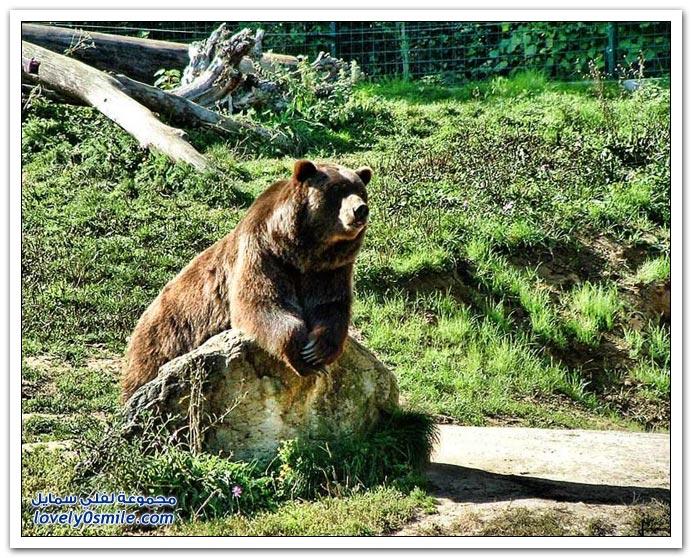 صور أنواع الدببة حول العالم Bears-72