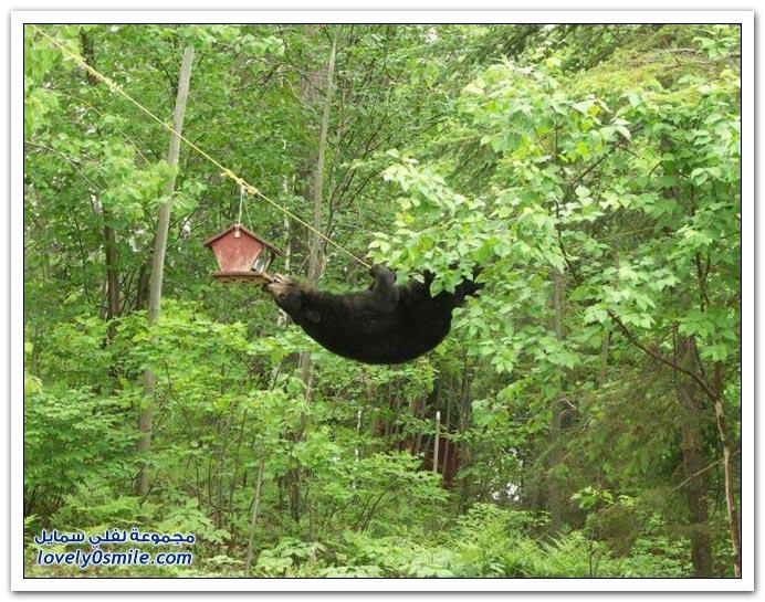 صور أنواع الدببة حول العالم Bears-73