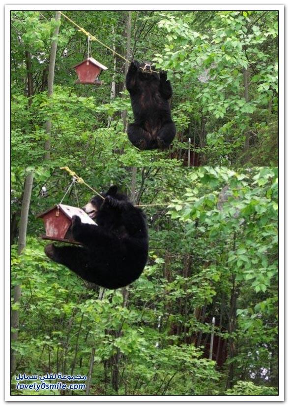 صور أنواع الدببة حول العالم Bears-74