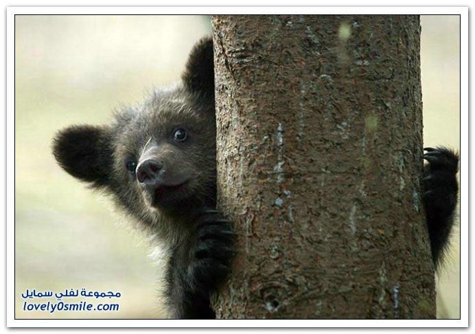 صور أنواع الدببة حول العالم Bears-75