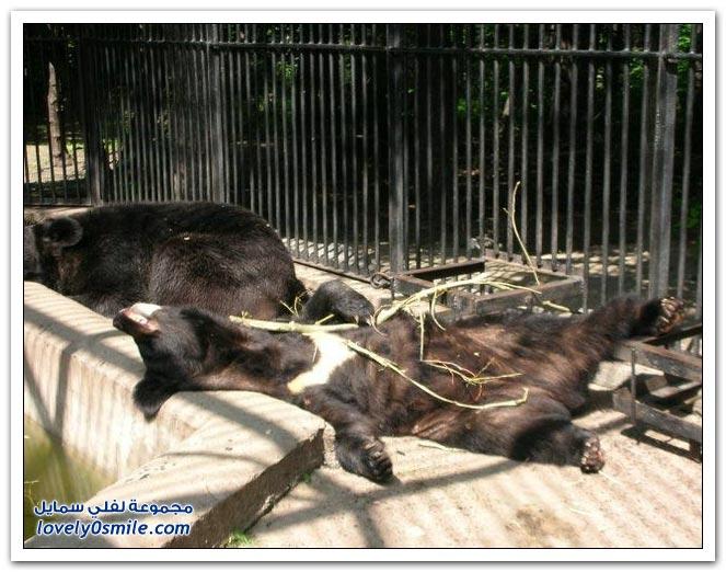 صور أنواع الدببة حول العالم Bears-76
