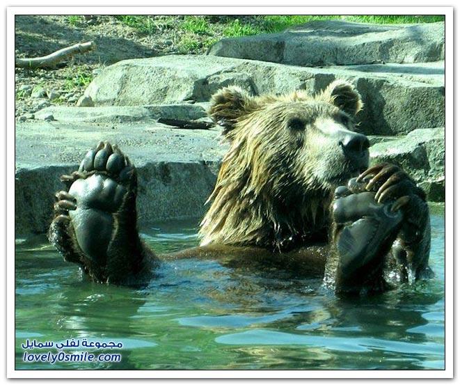 صور أنواع الدببة حول العالم Bears-78