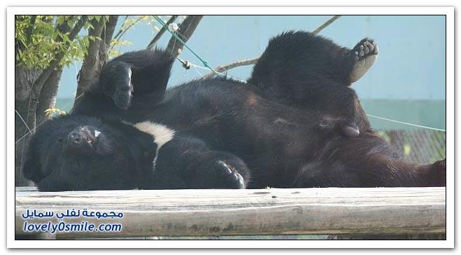 صور أنواع الدببة حول العالم Bears-80