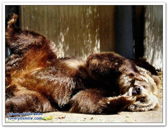 صور أنواع الدببة حول العالم Bears-81