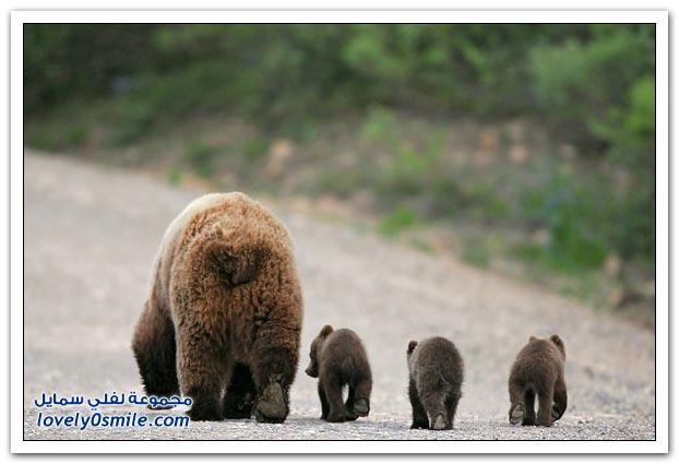 صور أنواع الدببة حول العالم Bears-82