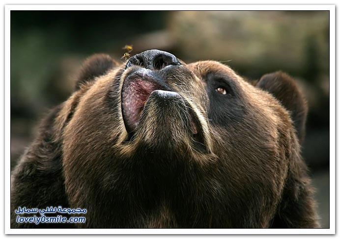 صور أنواع الدببة حول العالم Bears-83